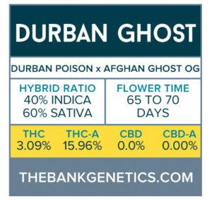 Durban Ghost