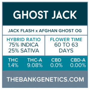 Ghost Jack