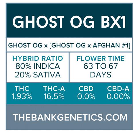 Ghost OG BX1