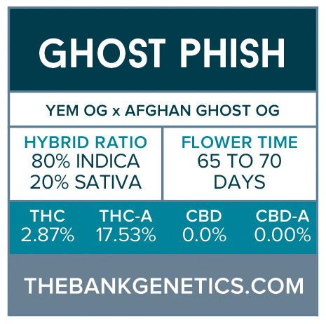 Ghost Phish