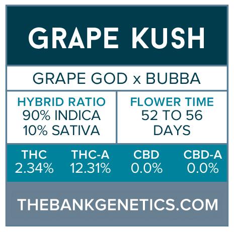 Grape Kush