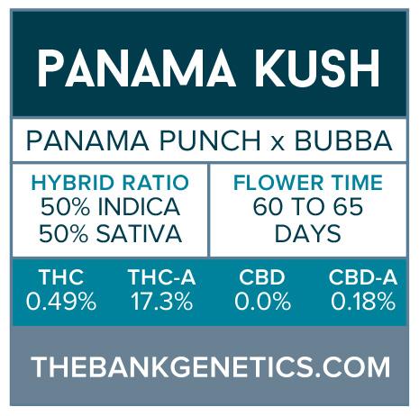Panama Kush