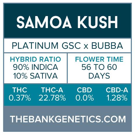 Samoa Kush